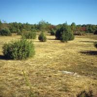 Des pelouses sèches restaurées conservant haies et bosquets © PNRCQ