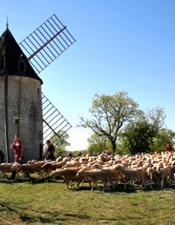 10 ème Transhumance Rocamadour-Luzech