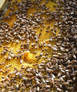 Goûtez les Causses du Quercy ! / Rencontre avec un apiculteur