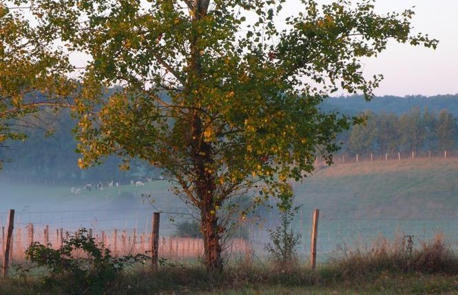 Alpagas du Quercy 9 - Frayssinet