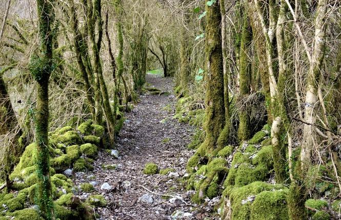Le Chemin du ruisseau qui se perd 3 - Sabadel-Lauzès