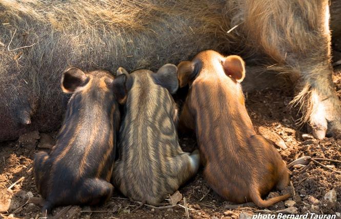 Parc Animalier de Gramat 10 - Gramat