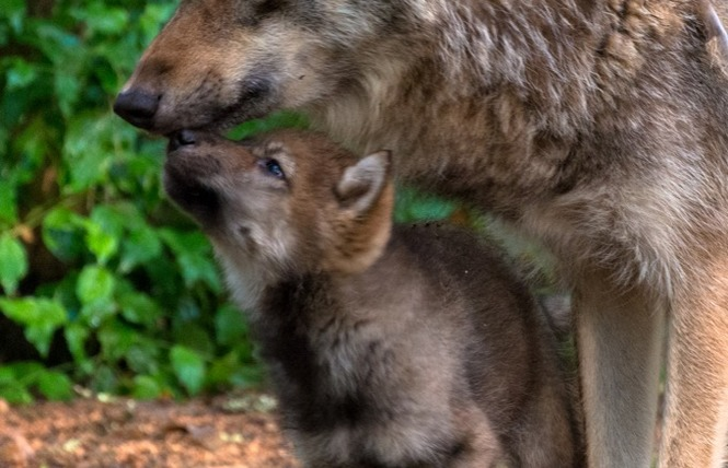 Parc Animalier de Gramat 13 - Gramat