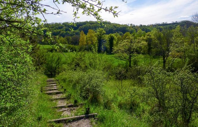 Le Marais de Bonnefont, Réserve Naturelle Régionale 12 - Mayrinhac-Lentour