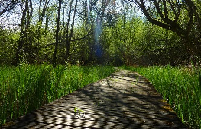 Le Marais de Bonnefont, Réserve Naturelle Régionale 9 - Mayrinhac-Lentour