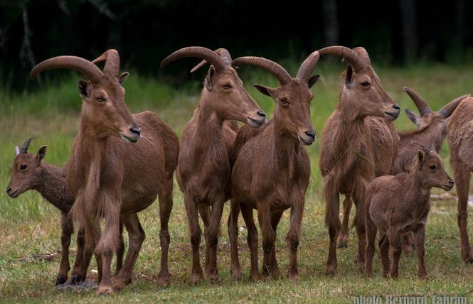 Parc Animalier de Gramat 19 - Gramat