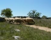8 éleveurs de Gréalou se mobilisent pour les landes et pelouses :