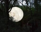 Succès pour Museum of the Moon