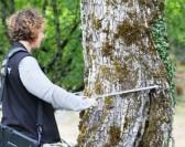 Une info pour les propriétaires forestiers
