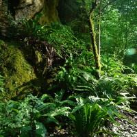 Au fond des phosphatières : paradis pour les mousses et les fougères ©JF Fabriol