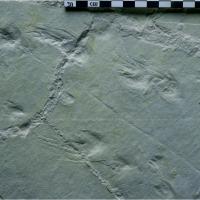 Plage aux pterosaures piste de tortue © Patrick Cabrol