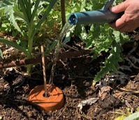 jardinassier