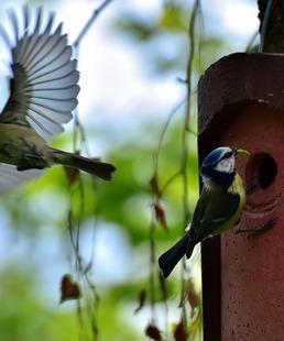 C'est du tout cui-cui - Sortie Ornithologique