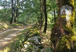 Chemin Autour du Mas