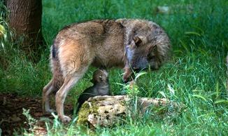 Parc Animalier de Gramat - Gramat