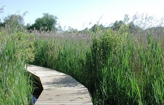 Réserve Naturelle Régionale du Marais de Bonnefont 5 - Mayrinhac-Lentour