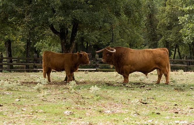 Parc Animalier de Gramat 24 - Gramat