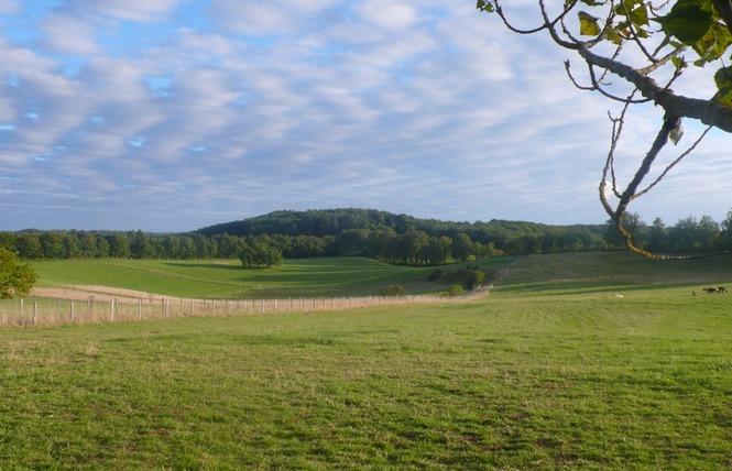Alpagas du Quercy 11 - Frayssinet