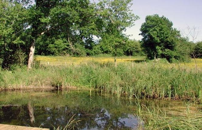 Réserve Naturelle Régionale du Marais de Bonnefont 1 - Mayrinhac-Lentour