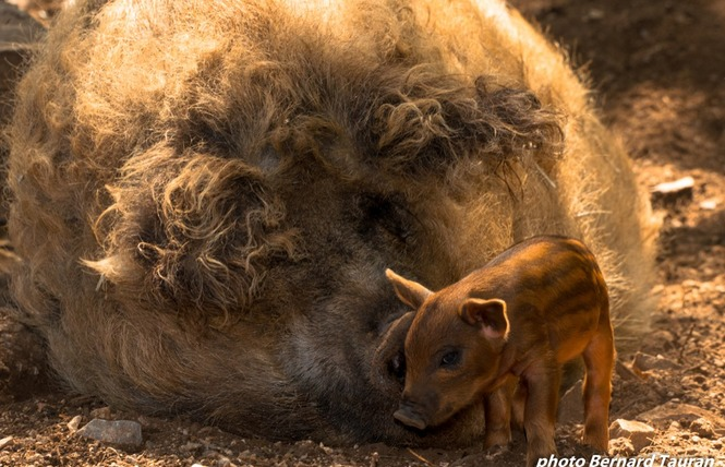 Parc Animalier de Gramat 11 - Gramat