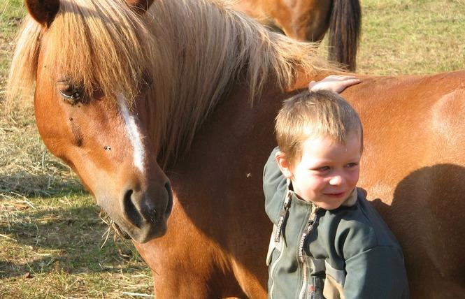 Ferme Equestre Chez Maiwenn 8 - Calvignac