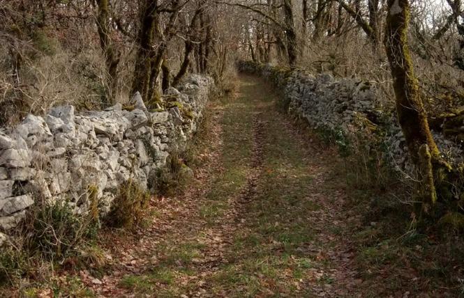Le sentier karstique de l'igue de Crégols 12 - Crégols