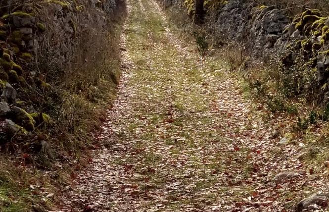 Le sentier karstique de l'igue de Crégols 11 - Crégols