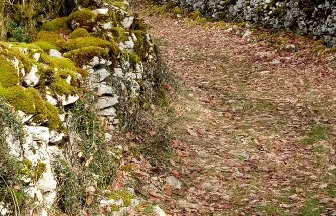 Le sentier karstique de l'igue de Crégols 9 - Crégols