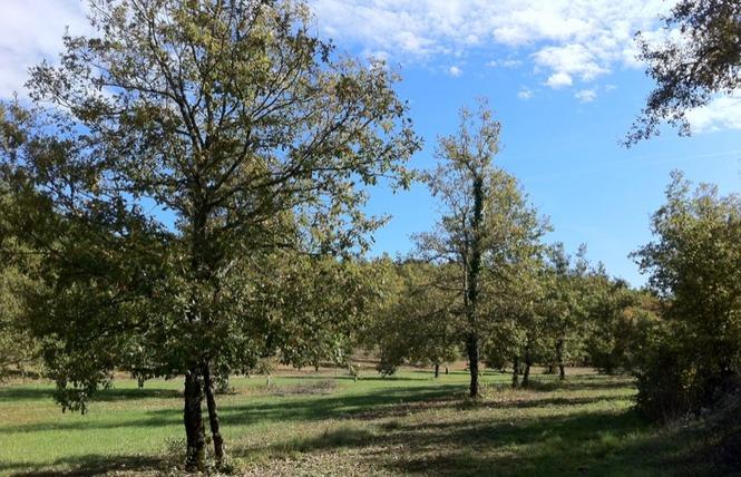 Le sentier des truffes 2 - Lalbenque