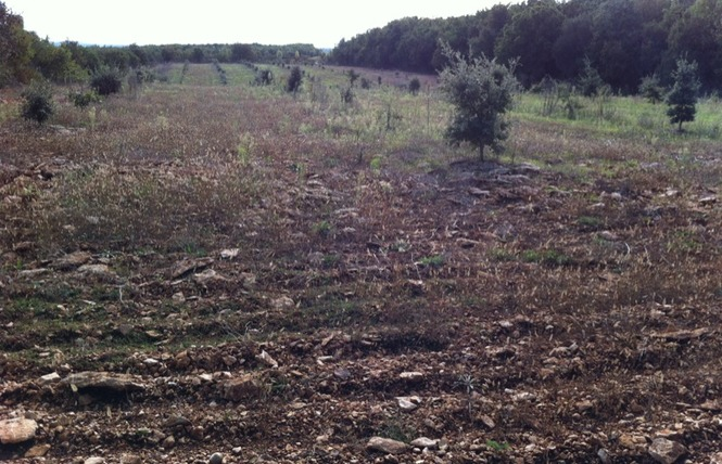 Le sentier des truffes 4 - Lalbenque