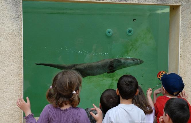 Parc Animalier de Gramat 7 - Gramat