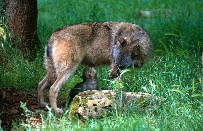 Parc Animalier de Gramat 1 - Gramat