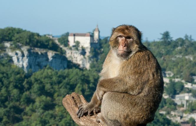 La Forêt des Singes 1 - Rocamadour